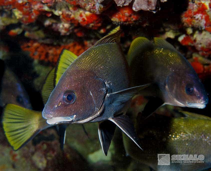 diving-trips-mallorca-5