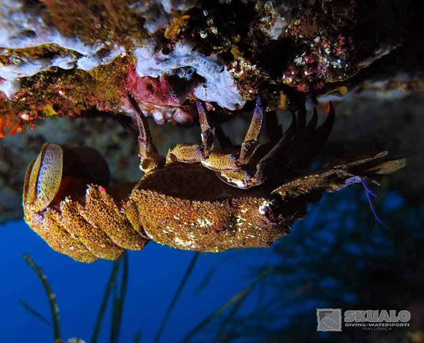 diving-trips-mallorca-8